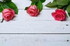 Розовые розы на белой деревянной предпосылке, открытом космосе для вашего tex Стоковая Фотография