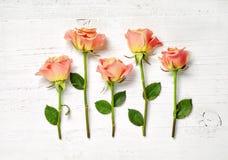 Розовые розы на белой деревянной предпосылке Стоковые Изображения