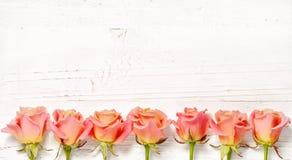 Розовые розы на белой деревянной предпосылке Стоковые Изображения RF