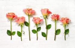 Розовые розы на белой деревянной предпосылке Стоковое Изображение