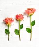 Розовые розы на белой деревянной предпосылке Стоковое фото RF