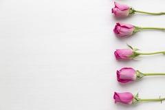 Розовые розы на белой деревянной предпосылке Стоковая Фотография RF