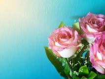 Розовые розы на голубом солнце предпосылки и утра Стоковое фото RF