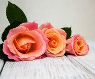 Розовые розы на деревянной предпосылке Стоковые Фото