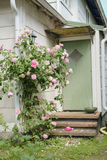 Розовые розы перед домом Стоковое Изображение RF
