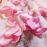 Розовые розы цветут педали лежа на том основании стоковые изображения rf