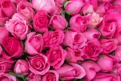 Розовые розы для предпосылки влюбленности Стоковое Изображение RF