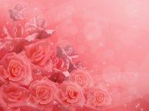 розовые розы иллюстрация вектора