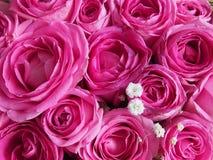 розовые розы стоковая фотография rf