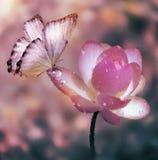 Розовые сновидения Стоковые Фотографии RF