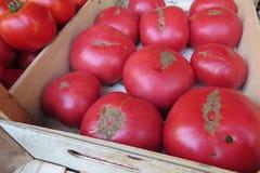 розовые томаты Стоковое Изображение