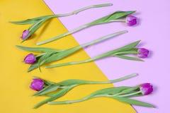 Розовые тюльпаны аранжировали в ряд на желтой и розовой предпосылке Валентайн приветствию s дня карточки Стоковые Изображения