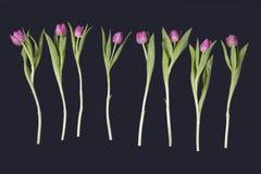 Розовые тюльпаны аранжировали в ряд на черной предпосылке Валентайн приветствию s дня карточки Стоковое Изображение