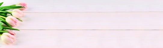 Розовые тюльпаны на белой предпосылке, знамени для вебсайта Стоковое Фото