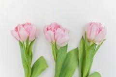 Розовые тюльпаны на белом деревянном фоне стоковое изображение