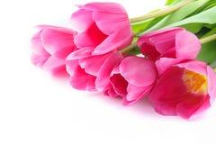Розовые тюльпаны на Валентайн или День матери изолировано стоковое изображение rf