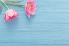 Розовые тюльпаны на голубой деревянной предпосылке стоковое фото