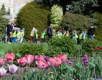 Розовые тюльпаны против группы в составе дети с учителями в ботаническом Стоковое Изображение RF