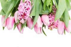 Розовые тюльпаны и цветки гиацинта на белизне Стоковое Изображение