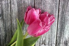 Розовые тюльпаны над затрапезным серым деревянным столом День женщины 8-ое марта стоковое изображение