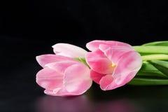 Розовые тюльпаны на черноте Стоковое фото RF