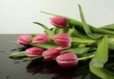 Розовые тюльпаны с капельками воды Стоковые Фотографии RF