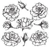 Розовые установленные цветки бесплатная иллюстрация