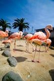 Розовые фламингоы стоковые фото
