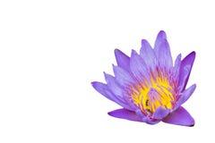Розовые цветения лотоса или изолированная лилия воды цветут зацветать Стоковая Фотография RF