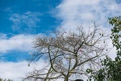 Розовые цветения Стоковое фото RF