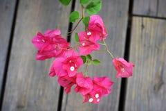 Розовые цветеня и листья зеленого цвета Стоковое Изображение RF