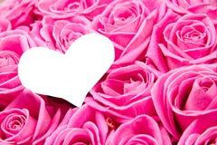 Розовые цветеня Стоковые Фото