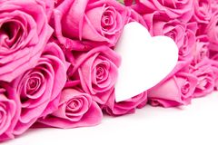 Розовые цветеня стоковое фото