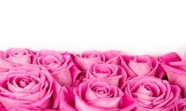 Розовые цветеня стоковая фотография rf