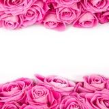 Розовые цветеня Стоковые Изображения