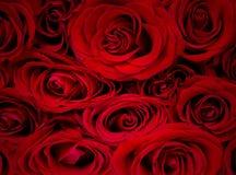 Розовые цветеня Стоковая Фотография