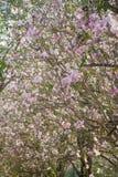 Розовые цветки вянут Стоковое фото RF