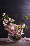 Розовые цветки в вазе на серой деревянной предпосылке Зацветать весеннего времени вектор изображения цветка букета яркий Стоковая Фотография