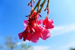 Розовые цветки в утре стоковые изображения rf