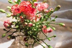 Розовые цветки гвоздики в вазе Стоковое Изображение