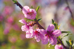 Розовые цветки закрывают вверх Стоковое фото RF