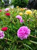 Розовые цветки и более красивое естественное Стоковая Фотография RF