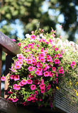 Розовые цветки на балконе стоковое фото rf
