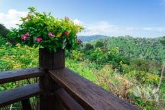 Розовые цветки на деревянной террасе с горой леса и голубым небом Стоковая Фотография RF
