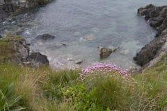 Розовые цветки на крае скалы Стоковые Изображения RF