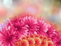 Розовые цветки, на красным предпосылке запачканной пинком closeup Коллаж цветков Стоковые Фотографии RF