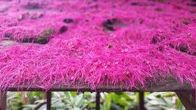 Розовые цветки на крыше стоковое фото