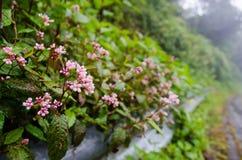 Розовые цветки на обочине Стоковая Фотография