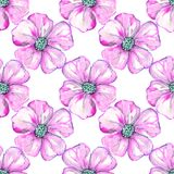 Розовые цветки на предпосылке Стоковое фото RF