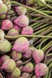 Розовые цветки лотоса бутона в корзине Стоковое Изображение RF